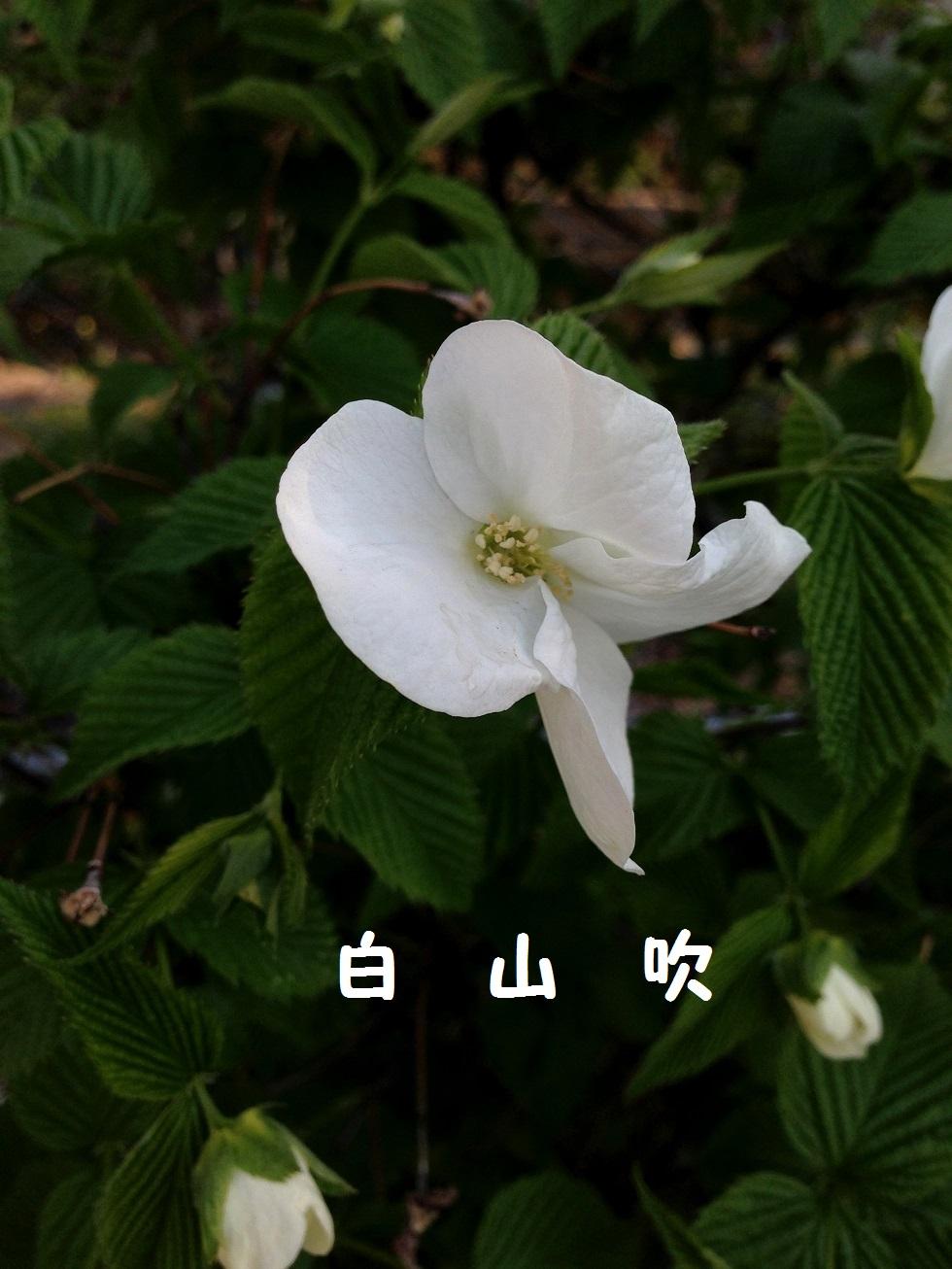 Img_0533_3